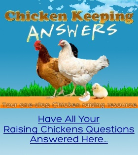 raising chickens questions