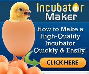 how to make a chicken incubator